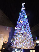 Kirameku_tree2
